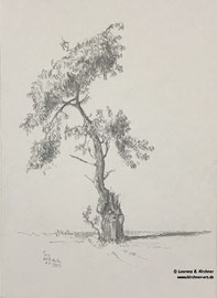 Einsamer Baum (29,5 x21 cm)
