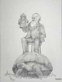 12. Februar- Internationaler Darwin-Tag - Zeichnung, Graphit 30 x 42
