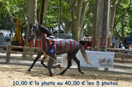Poulain de 3 ans - BRAVIO FUENTES -03