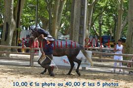 Poulain de 3 ans - BRAVIO FUENTES -02