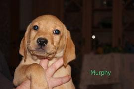 Murphy   2 Uhr 51   490 g