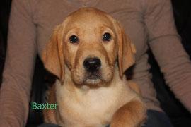 Baxter   6 Uhr 26   490 g
