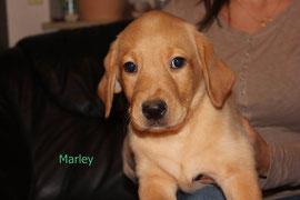 Marley   4 Uhr 19   470 g