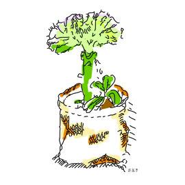 Illustration au feutre, vectorisée et couleur