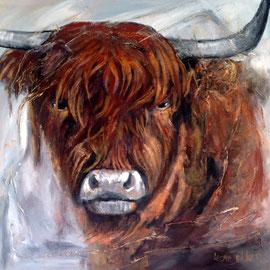 Schotse Hooglander  100x100 acryl niet meer verkrijbaar