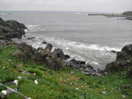 蕪島(青森県) Kabu Island, Aomori Pref.