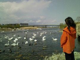 阿武隈川(福島県) Abukuma River, Fukushima Pref.