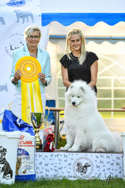 BEST IN SHOW 3.vieta SAMOJEDU SUNS SMILING MIRACLE GOLDEN EDITION