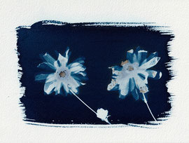 """Sibling flowers"", Cyanotype (23 x 16/5 cm), Hahnemühle-Papier,  2019 (sold)"
