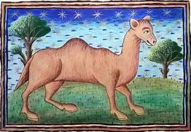 Camel (Reproduction of original at Museum Meermanno), 40cm x 27cm