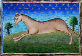 Horse  (Reproduction of original at Museum Meermanno), 40cm x 27cm