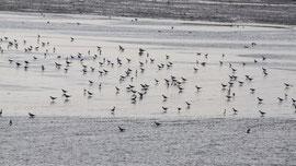 Sandbank auf Langeoog