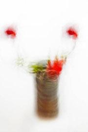 Photographie digital color Nature morte