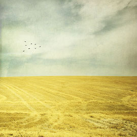 Yellow life in Andalousie   digital color Landscape Spain photoshop CC