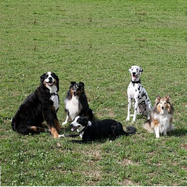 vlnr: Nora, Sharang, Moritz, Diva, Kaja