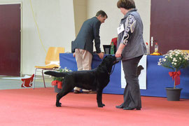 Bajka am 2.6.13 Retriever Club Show Burgdorf