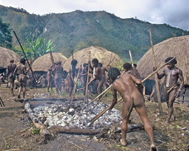 W. Papua, Baliem Valley: Dani men prepare a bed of hot stones on which to cook sweet potatoes