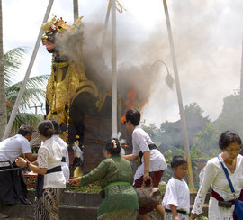 Bali, Payangan: Pelebon ceremony. Relatives commence to symbolically light the pyre