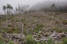 Tasmania, Derwent District: logging activity along Florentine Road