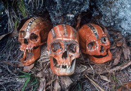PNG, Southern Highlands: three decorated skulls of Huli tribesmen in a rock cleft
