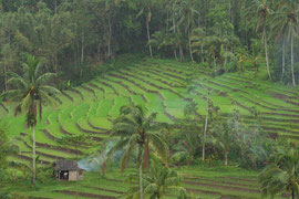 Bali, Jatiluwih area: rice terraces and farmer in front of his home