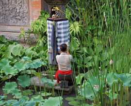 Bali, Ubud: waitress praying at a shrine in the lily pond by the Han Snel gallery