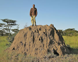 Tanzania, Klein's Camp: one of our guides, Kilian, posing atop a termite mound