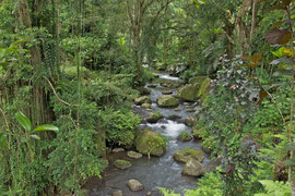 Bali, the stream beside Gunung Kawi Temple