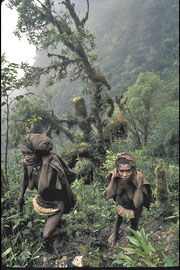 PNG, Star Mountains: ascending the Hindenburg Wall, accompanied by two Faiwolmin women
