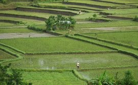 Bali, Ubud: view over rice paddies from Villa Bambu Indah