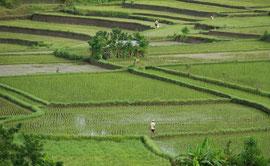 Bali, Ubud: view over rice paddies from Villa Bambu Indah