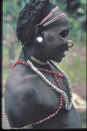 PNG, Nomad River area: a Samo (?) tribesman wearing a bamboo nose plug