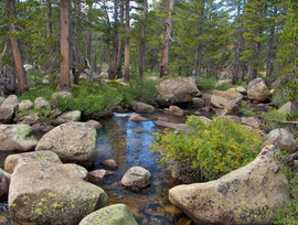 California, Yosemite NP: the Dana fork of theTuolumne River, en route to Tioga Pass