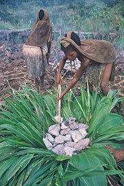PNG, Southern Highlands: Walebi, daughter of Tabulu, and her mother, Mogoli, prepare a fire pit to bake vegetables