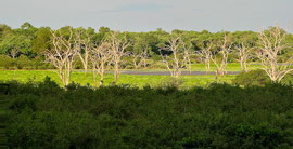Tanzania, Selous game reserve: a swamp area with dead trees