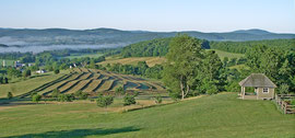 Rows of freshly-cut hay drying in the field below ours (July 2005)