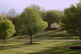 The same trees in springtime (May 2007)