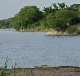 Tanzania, Selous game reserve: a small crocodile by a lake shore