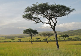 Tanzania, Klein's Camp: typical savannah scenery