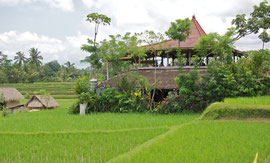 Bali, Ubud: the Sari Organic restaurant set amid rice paddies