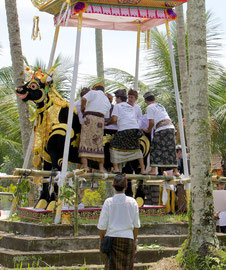 Bali, Payangan: Pelebon ceremony. The deceased woman is placed inside the bull