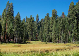 California, Sequoia National Park: Crescent Meadow