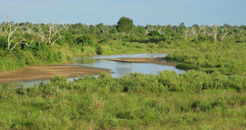 Tanzania, Selous game reserve: view of the Sand river