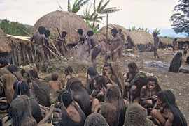 W. Papua, Baliem Valley: male Danis cook a pig in an oven of hot stones covered with banana leaves