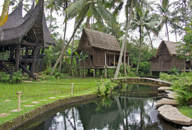 Bali, Ubud: houses, pool and rice paddy at Villa Bambu Indah