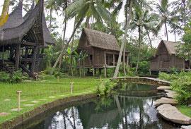 Bali, Ubud: houses, pool and rice paddy at Villa Bambu Indah