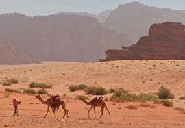 Jordan, Wadi Rum: Bedouin leading his camels