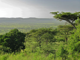 Tanzania, Klein's Camp: the view of the valley from our verandah