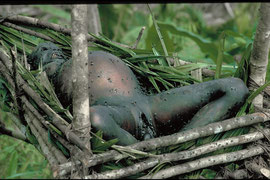 PNG, Nomad River: the decomposing corpse of a female Biami atop a platform near the longhouse at Sinibibi