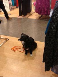 Dare alleingelassen im Kaufhaus